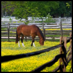 Stables and Pastures